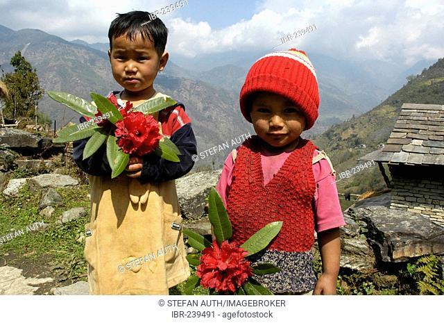Two cute kids with Rhododendron flowers Landruk near Pokhara Nepal