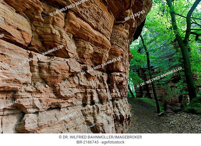 Climbing area, natural monument, Altschlossfelsen or Old Castle Rock in Eppenbrunn, Palatinate Forest Nature Reserve, Rhineland-Palatinate, Germany, Europe
