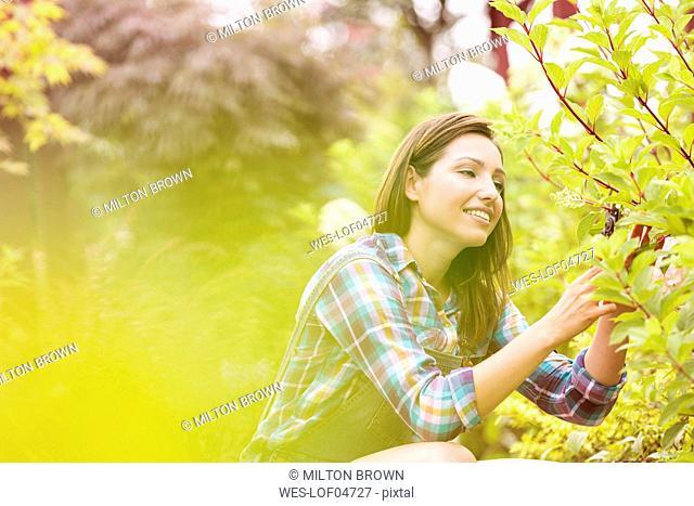 Gardener pruning plant