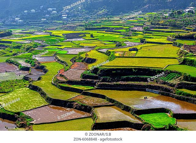 overview of the rice-terraces of Sagada, Luzon, Ph