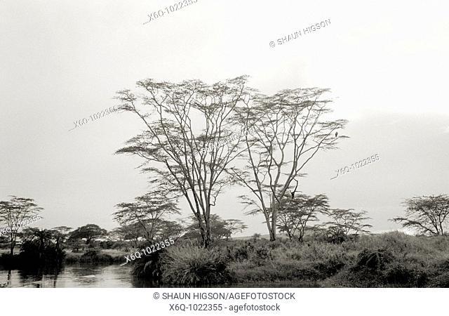 An ethereal scene in the Serengeti, Tanzania, Africa