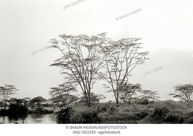 An ethereal enchanting serene scene in the Serengeti in Tanzania in Sub Saharan