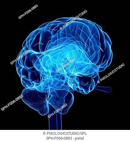 Human brain, computer artwork