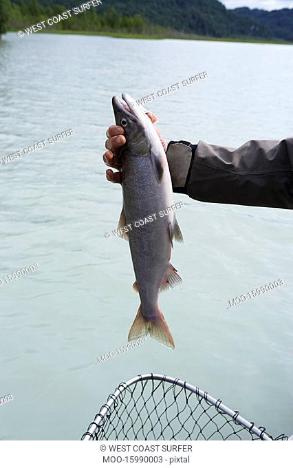 Person holding fish over net by river