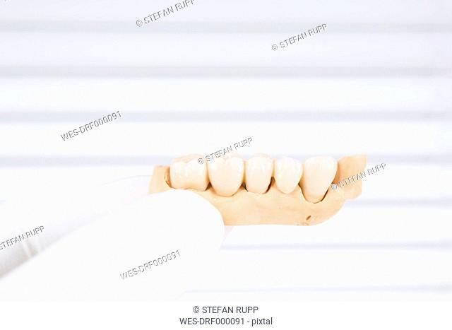 Germany, Freiburg, Doctor holding finished model of dental bridge