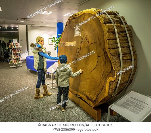 Tree stump showing the age rings, at a local library, Kopavogur, Iceland