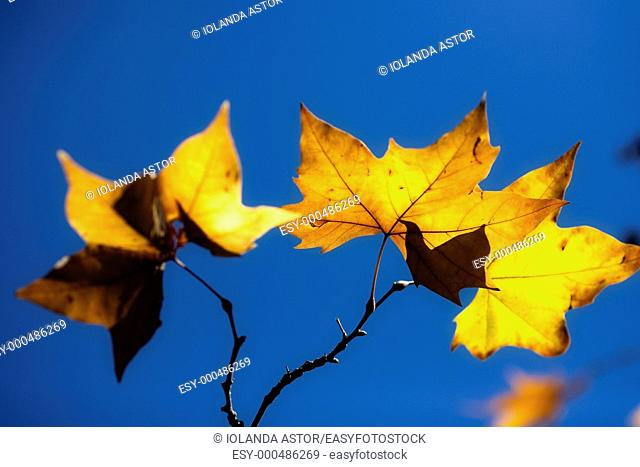 Tree leaf in autumn