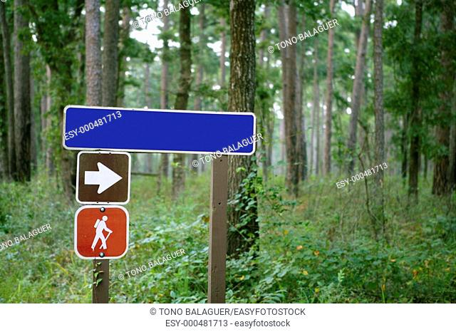 Blue traffic sign with copy space in the green forest