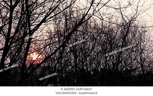 Winter sunrise with trees silhouette time-lapse