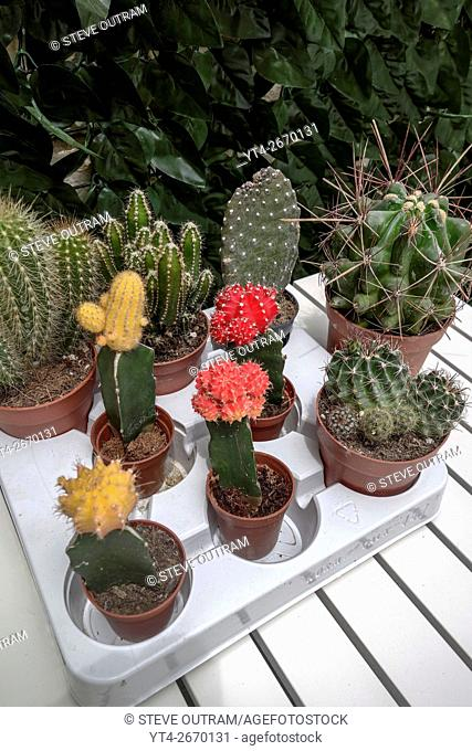 A variety of cactus plants on the table