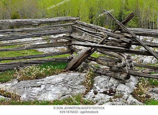 Limestone rocks, cedar split-rail fence and early saxifrage, Manitoulin Island- Sheguiandah, Ontario, Canada