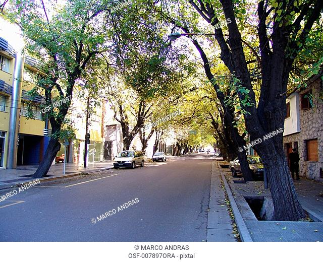 natural trees on the street