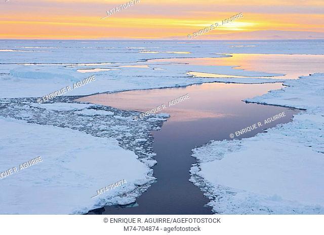 Icebergs in pack Ice at dusk, Antarctic Sound, Antarctica