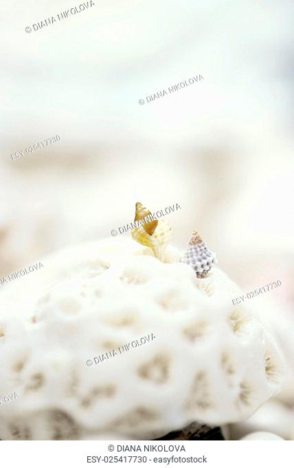 close up of seashells on a blurred background