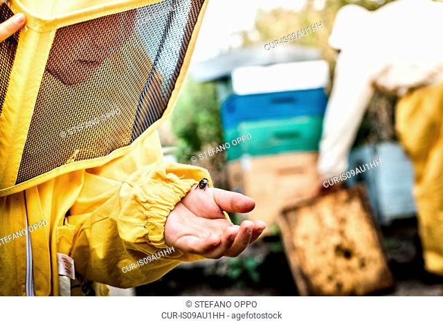 Young boy in beekeeper dress, holding drone bee in hand