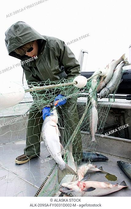 Commercial fisherman untangle a sockeye salmon from a gillnet aboard a commercial fishing boat Bristol Bay Alaska