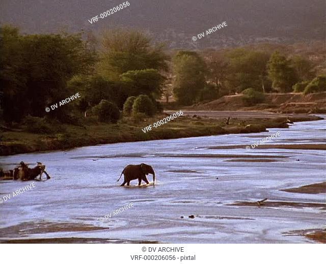 An elephant crosses a river in Kenya, Africa