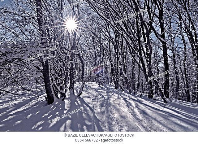 Crimea  Ukraine Wood