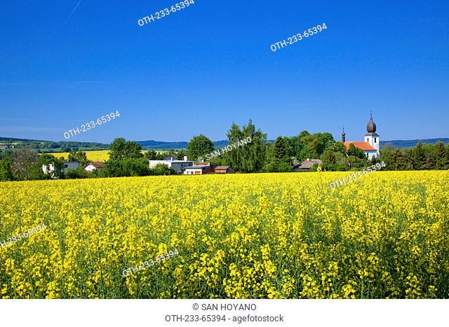Rape fields at countryside of Bohemia, Czech Republic