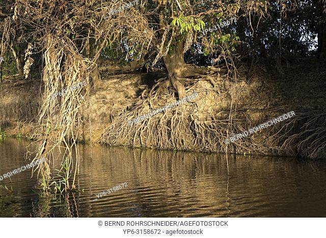 riverbank with trees in evening light, Pantanal, Mato Grosso, Brazil