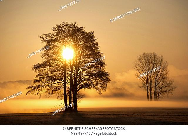 Sunrise, trees in the morning fog, Regnitz valley, Franconia, Bavaria, Germany