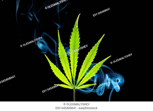 A green cannabis leaf on a black background enveloped in smoke