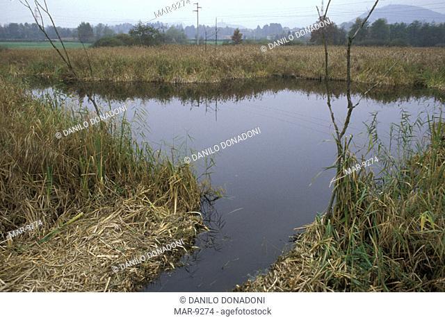 marsh detail, bassone peat bog, italy