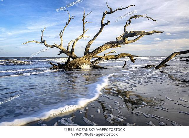 Low tide landscape at Driftwood Beach - Jekyll Island, Georgia, USA
