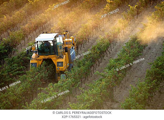 Harvest in Laguardia, La Rioja, Spain, Europe