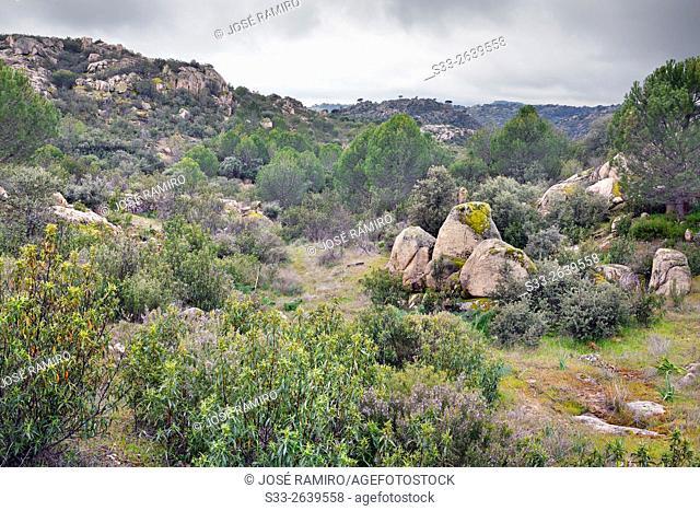 Alcornocoso hill. Almorox. Toledo. Castilla la Mancha. Spain. Europe