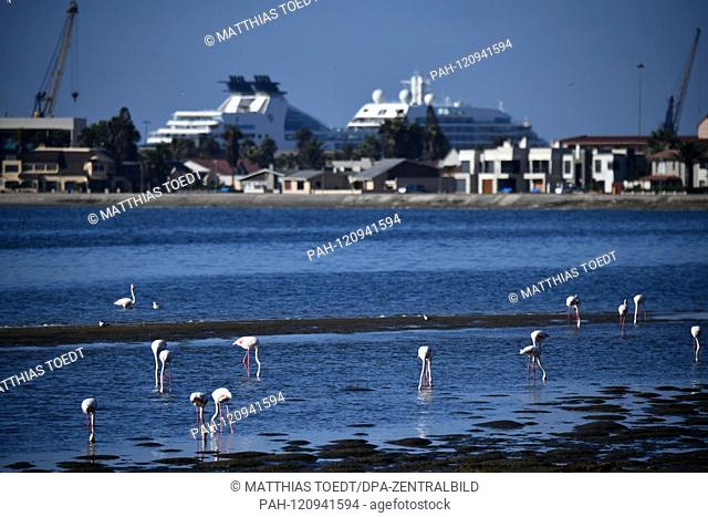 Flamingos wading in the harbor of Walfishbay, in the background cruise ships and loading cranes for the deletion of containers and heavy cargo, taken on 01