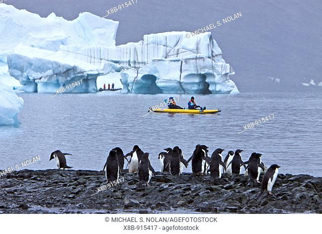 Guests from the Lindblad Expedition ship National Geographic Endeavour kayaking with Adelie penguins on icebergs in and around the Antarctic Peninsula in the...