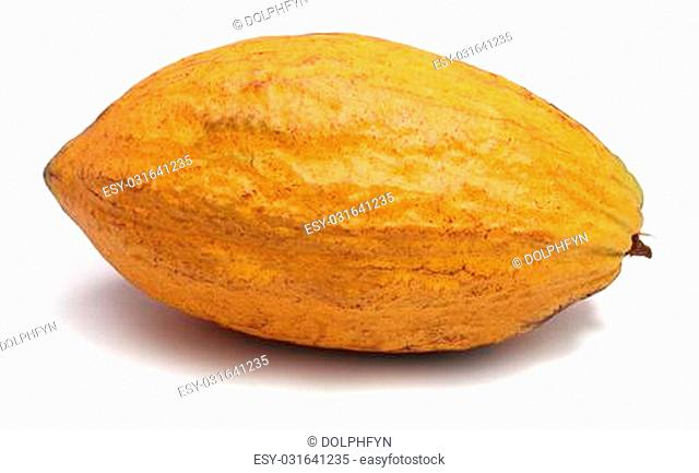 A fresh cacao pods isolated on a white background