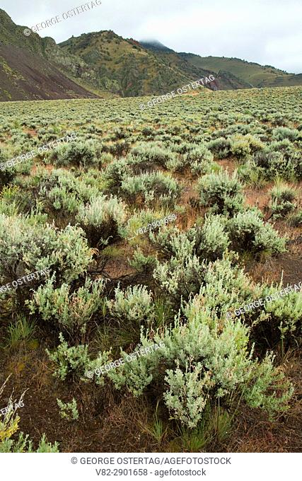 Sagebrush at Hart Mountain, Hart Mountain National Antelope Refuge, Lakeview to Steens National Back Country Byway, Oregon
