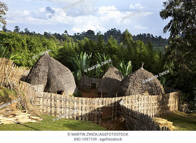 Huts of the Dorze people in the Guge Mountains of Ethiopia with groves of cooking banana, enset  The tribe of the Dorze is living high up in the Guge Moutains...