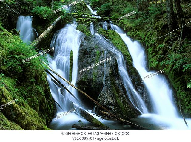 Little Zig Zag Falls, Mt Hood National Forest, Oregon
