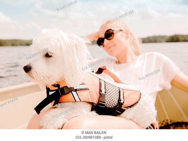 Coton de tulear dog sitting on woman's lap in boat, Orivesi, Finland