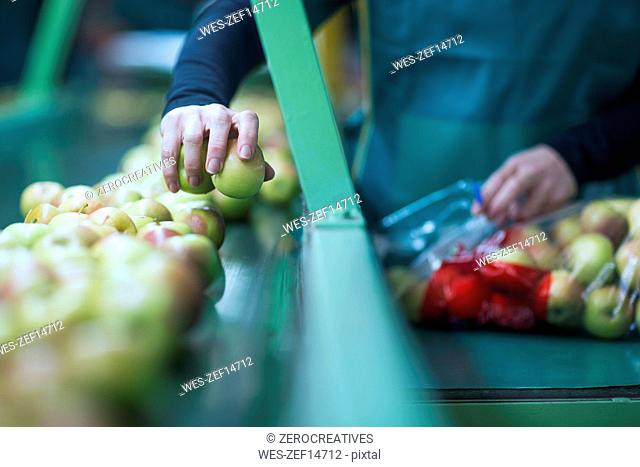 Close-up of woman packing apples in plastic bags in factory