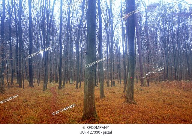 forest - autumn - fog