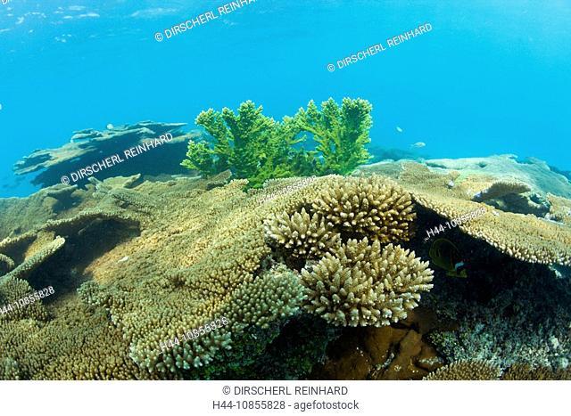 10855828, Corals, Bikini Lagoon, Marshall Islands