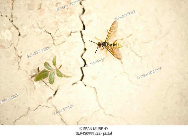 A wasp and a weed on a cracked wall