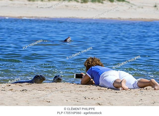 Woman lying on her belly on the beach and taking pictures with smartphone of curious grey sales, Ythan Estuary, Sands of Forvie at Newburgh, Scotland