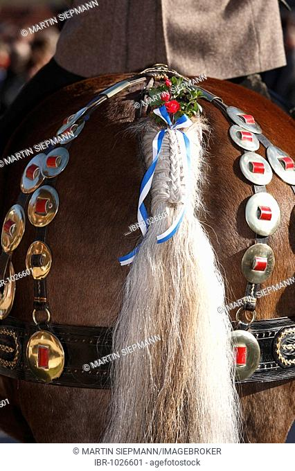 Decorated horse's tail during Leonhardifahrt, the feast day of Saint Leonard of Noblac, Kreuth, Tegernsee Valley, Upper Bavaria, Germany, Europe
