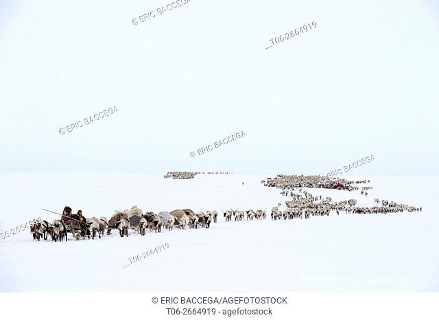 Nenets herders travelling by sled pulled by Reindeer (Rangifer tarandus) on their spring migration in the tundra, Yar-Sale district, Yamal, Northwest Siberia