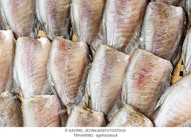 Snakeskin Gourami (Trichogaster pectoralis) dried fish for food