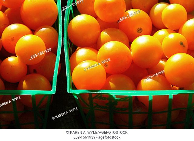 gold-orange cherry tomatoes, sunlit, in green plastic wire mesh baskets at farmers' market