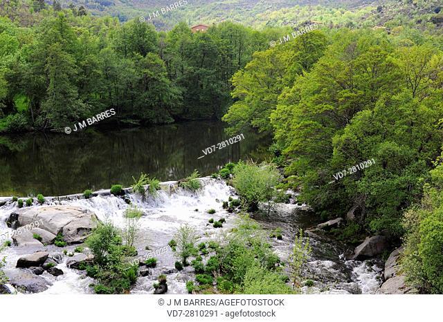 Alberche river with alders. Avila, Castilla y Leon,Spain