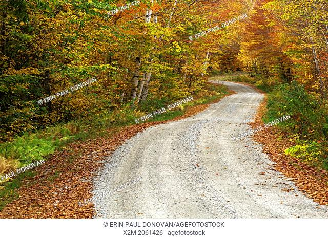 Gale River Forest - Autumn foliage along Gale River Road in the White Mountains, New Hampshire USA