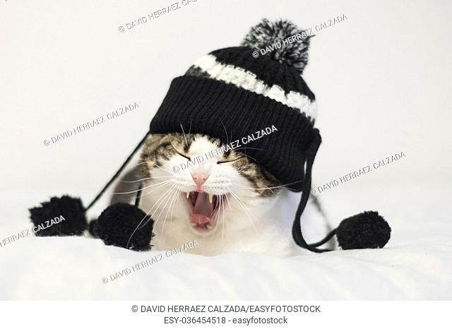 Funny cat yawning ready to sleep, wearing a warm hat with pompon. Lying on a blanket. Winter season concept