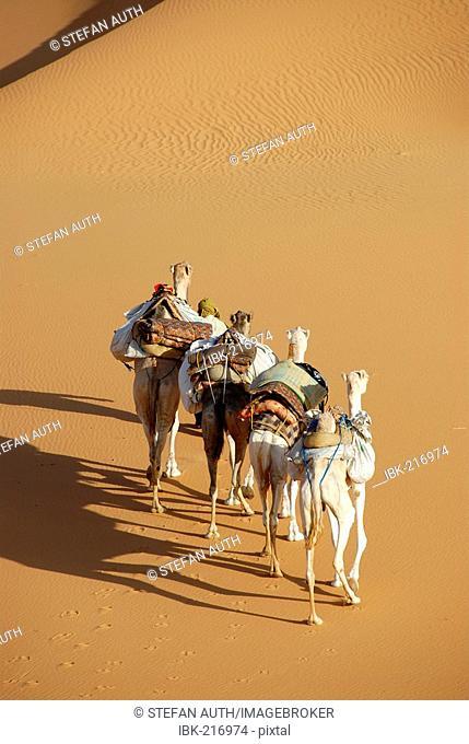 Four camels side by side in the desert Mandara Libya